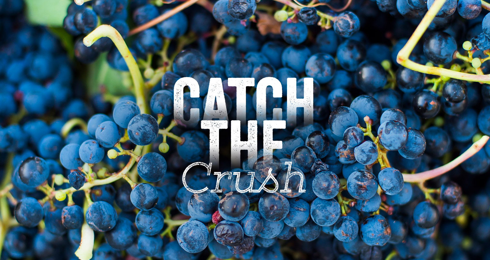 Catch the Crush Event in Yakima Valley Wine Country